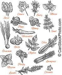 temperos, loja, vetorial, esboço, ícones, de, ervas