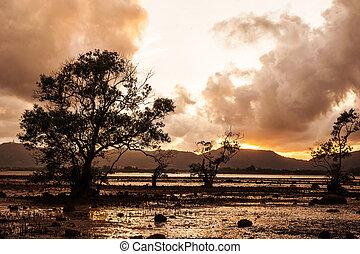 tempesta, colorare, albero, tramonto, mare, nuvola