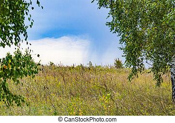 tempestuoso, sky., árvores, campo, verde, contra, fundo