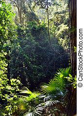 templado, understory, rainforest