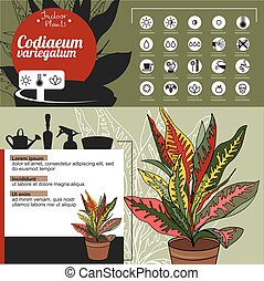 Template for indoor plant Codiaeum. Tipical flowers grown at...