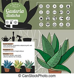 Template for indoor plant Gasteria. Tipical flowers grown at...