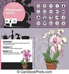 Template for indoor plant Phalaenopsis. Tipical flowers ...