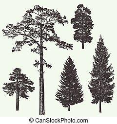 template., vetorial, desenho, árvore, vindima, ilustração, floresta