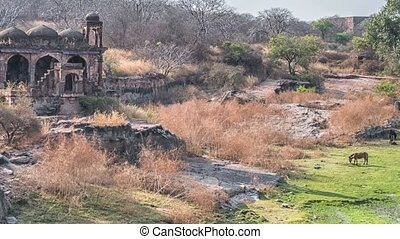 Temple ruins, Ranthambore Fort, Ranthambore National Park, Rajasthan, India
