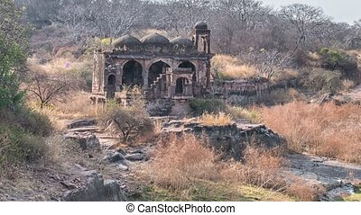 Temple ruins, Ranthambore Fort, Ranthambore National Park,...