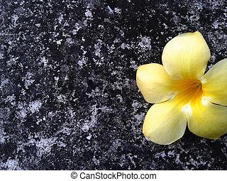 Temple tree. Flower. On the cement floor