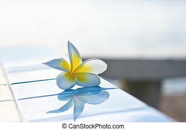 Temple tree flower with reflection on tiles