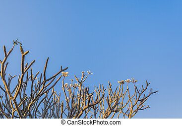 Temple Tree - image of Temple Tree and clear blue sky.