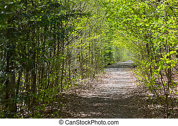 tempo primaverile, sentiero foresta