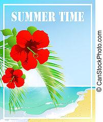 tempo verão, estrela mar, céu