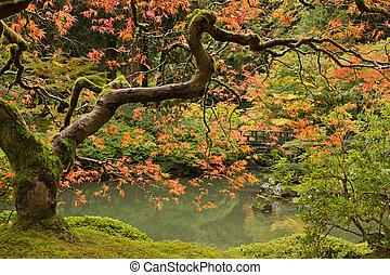 temporada caída, en, jardín japonés, 2