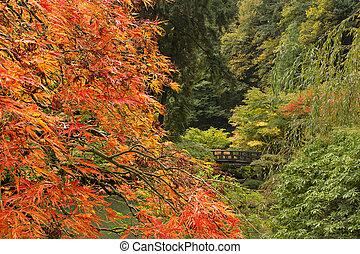 temporada caída, en, jardín japonés
