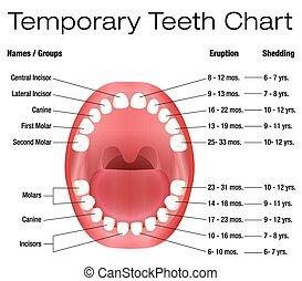 Temporary Teeth Primary Eruption - Temporary teeth - names, ...