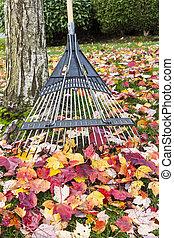 temps, haut, propre, automne