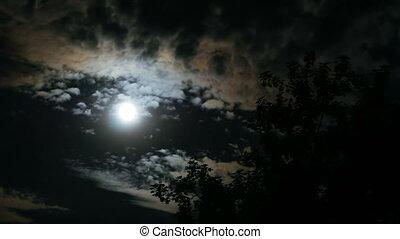 temps, nuit, défaillance, par, ciel lune, nuages, entiers, sombre, mouvements, arbres.