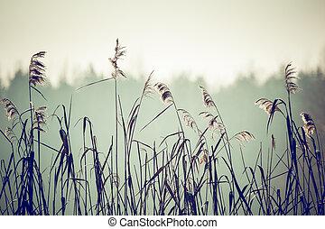 temps, pologne, paysage, hiver
