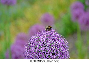 temps ressort, abeille