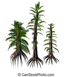 Tempskya sp Trees - Tempskya is an extinct genus of...