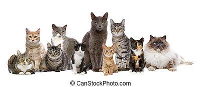 ten cats in a row