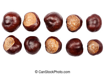 Ten conkers isolated on white background