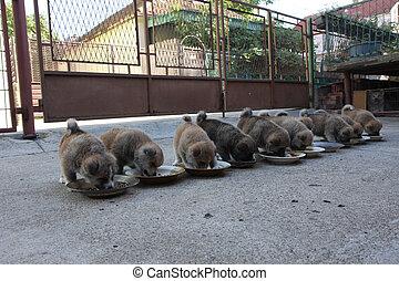 Ten cute puppies eating in the yard
