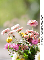 chrysanthemum on abstract spring calm background
