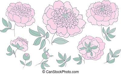 tender elegant floral elements set for web and print. peony...