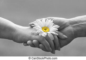 Tender love - handshake with daisy(focus on the flower, ...