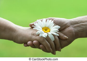 handshake with daisy(special soft f/x,focus point on the flower)