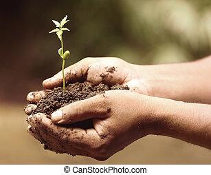 Tender medicinal neem plant - Hands holding a tender...