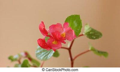 tender pink flower