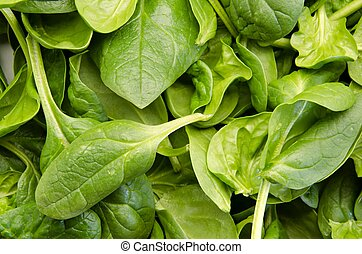 Tender shoots of fresh spinach