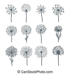 Tender wild dandelion in all phases of blooming. Flower with...