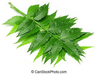 tendre, médicinal, feuilles, neem