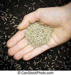 tenencia de la mano, pasto o césped, semilla