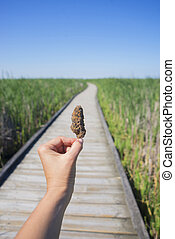 tenencia de la mano, un, cannabis, nug, contra, rastro, y azul, cielo, paisaje