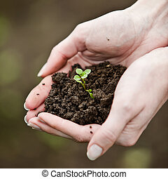 tenencia de la mano, un, fresco, joven, plant., símbolo, de,...