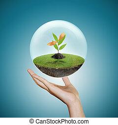 tenencia de la mano, un, pequeño, planta