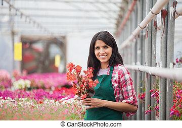 tenencia, mujer, flor, trabajando, invernadero