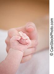 tenerezza, cura, genitore, capretto