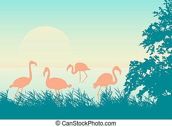 tenger, green-orange, gyakorlatias, tengerpart, ég, felkelés, falka, vektor, táj, ábra, flamingó, afrikai, nap