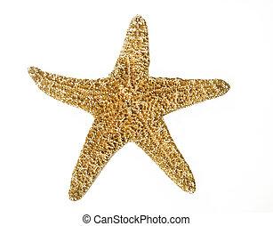 tengeri csillag