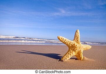 tengeri csillag, képben látható, a, nyár, tengerpart