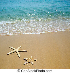 tengeri csillag, képben látható, egy, tengerpart homok