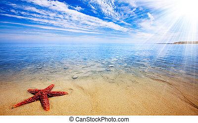 tengeri csillag, paradicsom