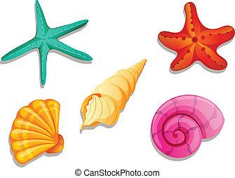 tengeri kagylók, színpompás