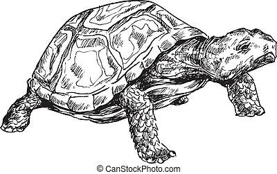 tengeri teknős, húzott, kéz