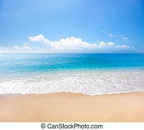 tengerpart, és, tropikus, tenger