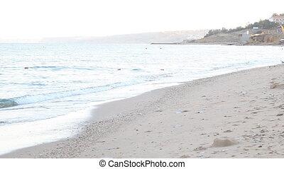 tengerpart, falka, sirály, homokos